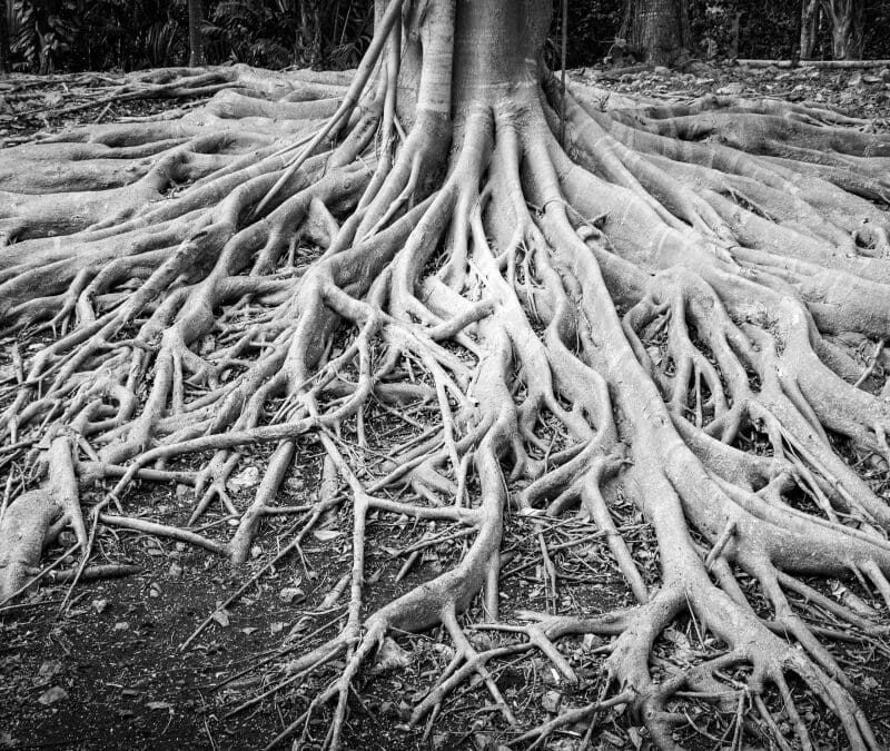 roots with brain